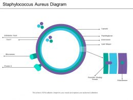 Staphylococcus Aureus Diagram
