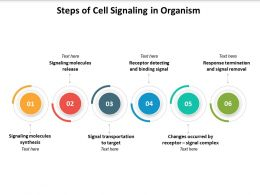 Steps Of Cell Signaling In Organism