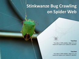 Stinkwanze Bug Crawling On Spider Web