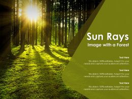 Sun Rays Image With A Forest