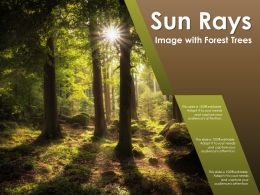 Sun Rays Image With Forest Trees