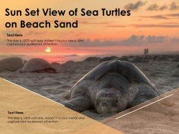Sun Set View Of Sea Turtles On Beach Sand