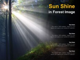Sun Shine In Forest Image