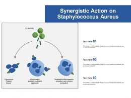 Synergistic Action On Staphylococcus Aureus