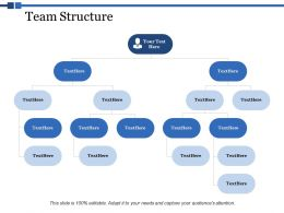 Team Structure Ppt Powerpoint Presentation Summary Icon