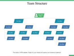 Team Structure Ppt Professional Infographic Template