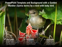 Template And Background With A Garden Warbler Sylvia Borin By A Nest With Baby Bird