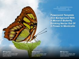Template And Background With A Monarch Butterfly Drinking Nectar Out Of A Flower In Monticello