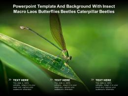 Template And Background With Insect Macro Laos Butterflies Beetles Caterpillar Beetles