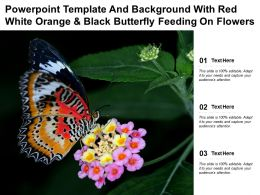 Template And Background With Red White Orange And Black Butterfly Feeding On Flowers