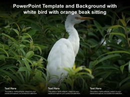Template And Background With White Bird With Orange Beak Sitting Ppt Powerpoint