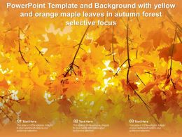 Template Background With Yellow And Orange Maple Leaves In Autumn Forest Selective Focus