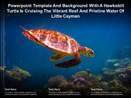 Template With A Hawksbill Turtle Is Cruising The Vibrant Reef And Pristine Water Of Little Cayman