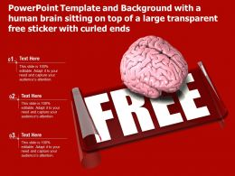 Template With A Human Brain Sitting On Top Of A Large Transparent Free Sticker With Curled Ends