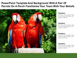 Template With A Pair Of Parrots On A Perch Familiarise Your Team With Your Beliefs