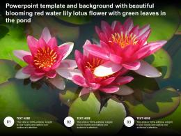 Template With Beautiful Blooming Red Water Lily Lotus Flower With Green Leaves In The Pond