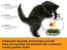 Template With Black Cat Reaching Into Fishbowl With A Shocked Scared Goldfish Inside