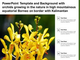 Template With Orchids Growing In Nature In High Mountainous Equatorial Borneo On Border With Kalimantan