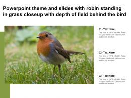 Theme And Slides With Robin Standing In Grass Closeup With Depth Of Field Behind The Bird
