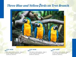 Three Blue And Yellow Birds On Tree Branch