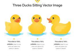 Three Ducks Sitting Vector Image