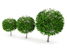 Three Green Trees Stock Photo