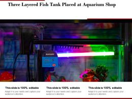 Three Layered Fish Tank Placed At Aquarium Shop