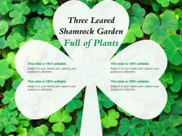 Three Leaved Shamrock Garden Full Of Plants