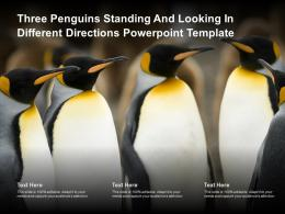 Three Penguins Standing And Looking In Different Directions Powerpoint Template