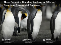 Three Penguins Standing Looking In Different Directions Powerpoint Template