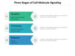 Three Stages Of Cell Molecule Signaling