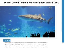 Tourist Crowd Taking Pictures Of Shark In Fish Tank