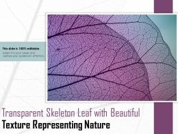 Transparent Skeleton Leaf With Beautiful Texture Representing Nature