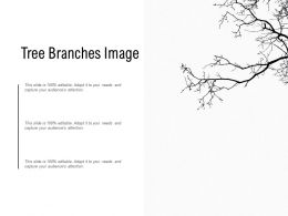 Tree Branches Image
