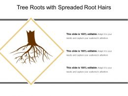 Tree Roots With Spreaded Root Hairs