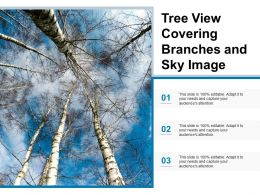 Tree View Covering Branches And Sky Image