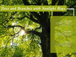 Trees And Branches With Sunlight Rays