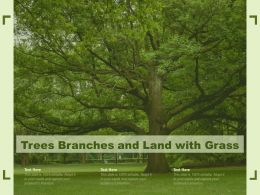 Trees Branches And Land With Grass