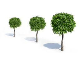 Trees Showing Slow To Medium Growth Rate Stock Photo