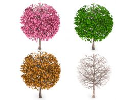 Trees With Four Seasons Stock Photo