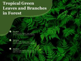 Tropical Green Leaves And Branches In Forest