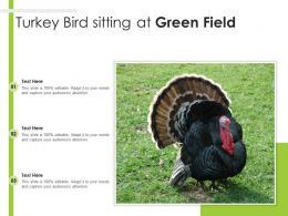 Turkey Bird Sitting At Green Field