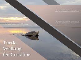 Turtle Walking On Coastline