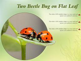 Two Beetle Bug On Flat Leaf