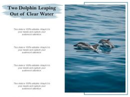 Two Dolphin Leaping Out Of Clear Water