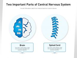 Two Important Parts Of Central Nervous System