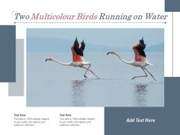 Two Multicolour Birds Running On Water