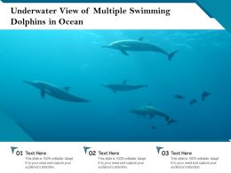 Underwater View Of Multiple Swimming Dolphins In Ocean