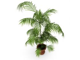 unique_green_plant_stock_photo_Slide01