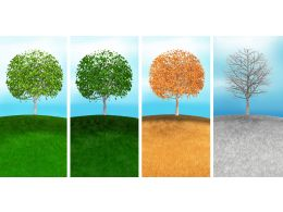 Variety Of Season With Four Colored Tree With Different Backgrounds Stock Photo